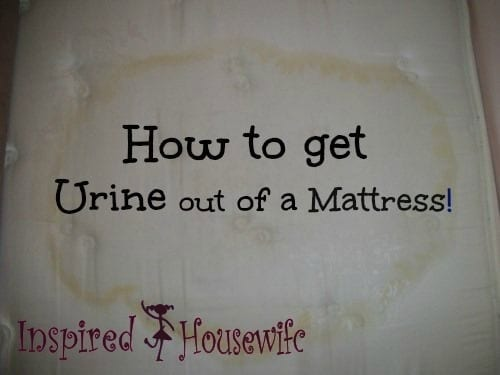 Before Photo for How to Get Pee Stains Out of a Mattress